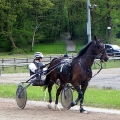 Presteigne Harness Racing (Sunday 31st May 2015)