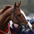 Sire De Grugy for Chepstow