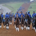 GODOLPHIN SYSTEM (25th October 2016)