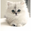 Trot Talk TV and the fluffy kitten