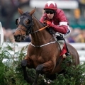 FOXHUNTER CHASE