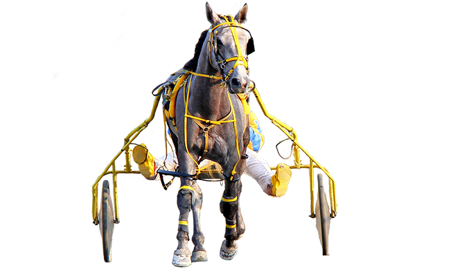harness_horse